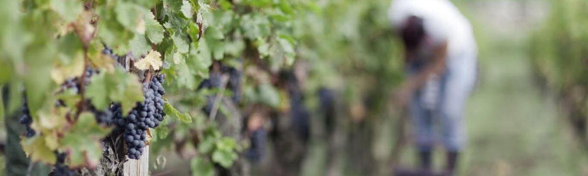 «On pense à notre santé mais aussi aux conséquences économiques», Claude, chauffeur viticole, militant CFTC